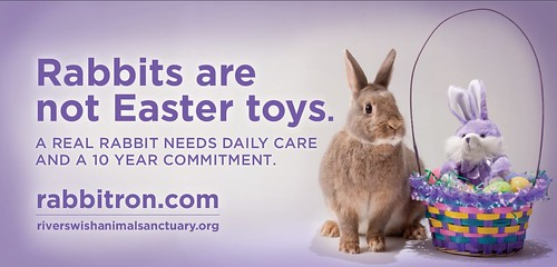 Rabbits Are Not Easter Toys