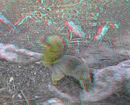 3Dv2.0FieldTest-ANAGLYPH 039