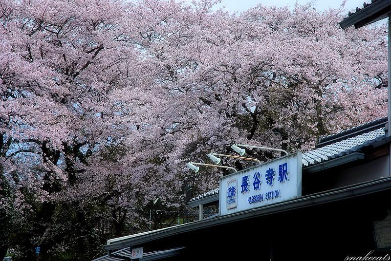 花の長谷寺駅  長谷寺 - 奈良