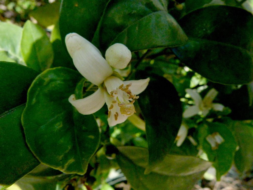 24-03-2012-spring-celebration-a2