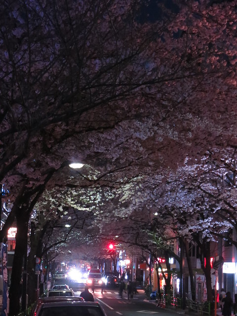 Sakura night street 02