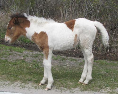 pony1montholdfoal - Copy