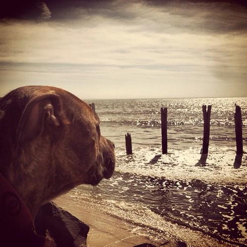 molly/staring at the sea