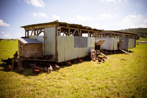 Polyface Farm 2012-0089.jpg
