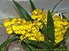 Orhideea Anului 2012 ... 7456473834_1e543aca9c_t