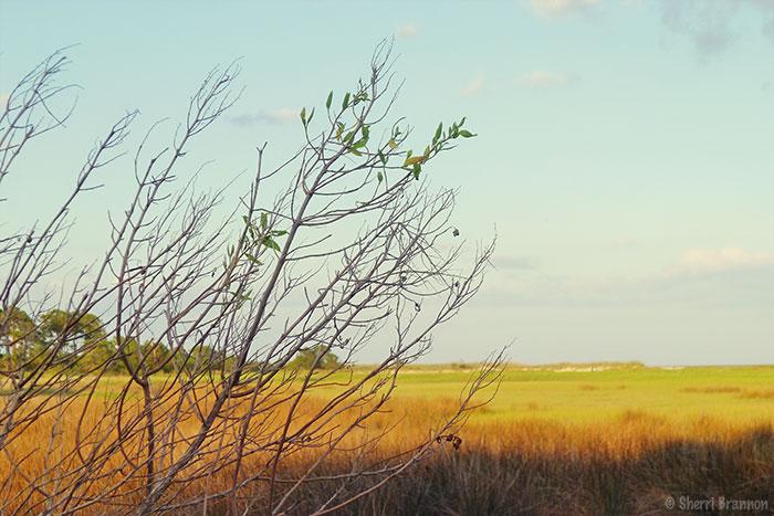marsh branch