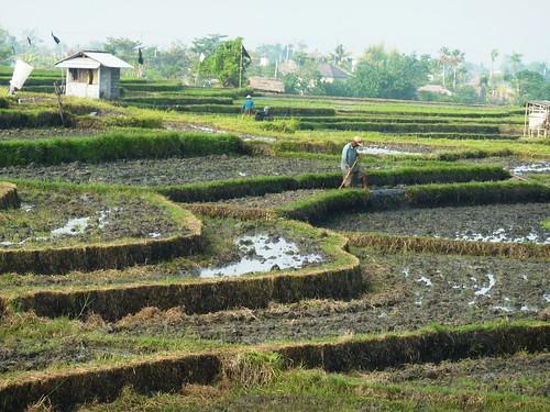 Bali-Route Legian-Jatiluwih (4)