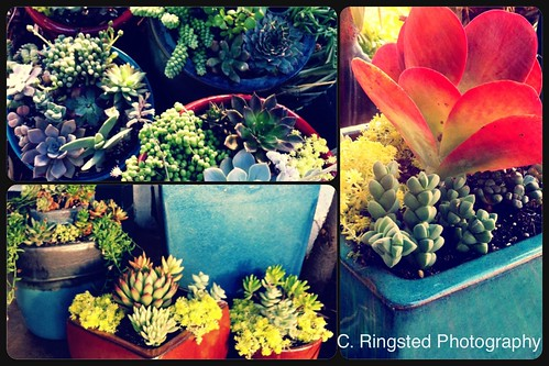 DIY: Succulent Container Gardens by Sanctuary-Studio