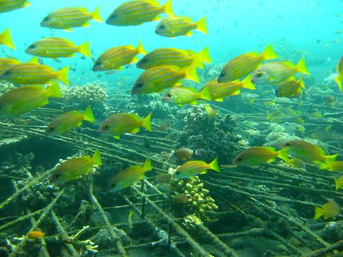 Mergulho em Bali