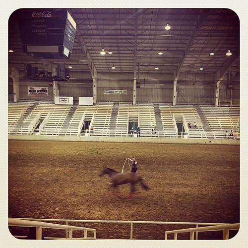 Horse on a leash, Memphis, Tenn.