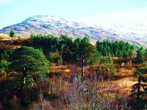 Trosssachs Scenery, Scotland