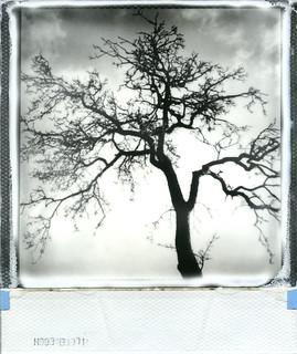 february tree