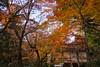 Photo:室生寺の紅葉 / Autumn Leaves at Muro-ji Temple By kimtetsu