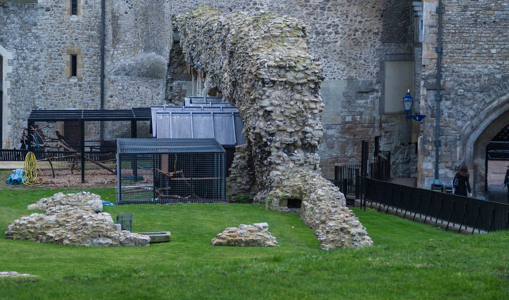 Ravens roost at the Tower of London 2012