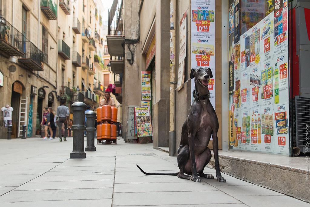 Собака в старом городе Барселоны