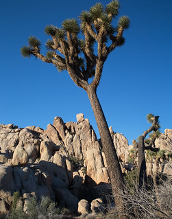 Leaning Tree and Rocks