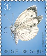 14bis papillon Piéride du chou