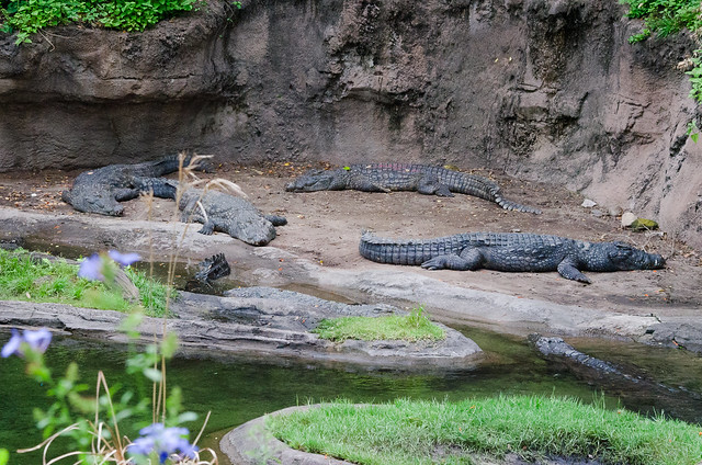 20160416-Disney-Vacation-Animal-Kingdom-Day-2-Safari-Ride-0069