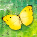 Butterfly - freebie :)