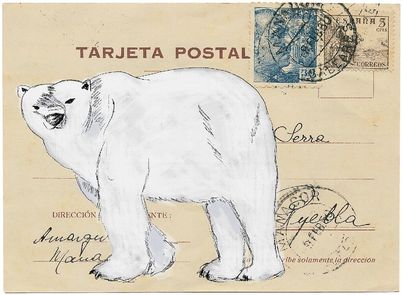 polar bear on postcard