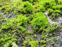 shrub(0.0), flower(0.0), tree(0.0), moss(0.0), soil(1.0), plant(1.0), herb(1.0), produce(1.0), non-vascular land plant(1.0), vegetation(1.0), groundcover(1.0),