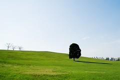 외톨이 나무