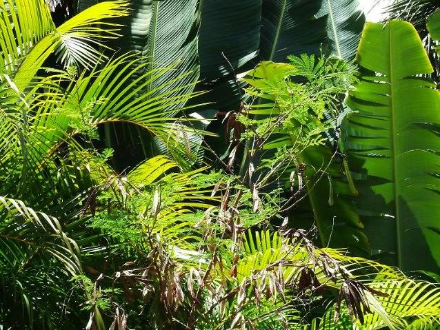 Tropical rainforest biomes article  Khan Academy