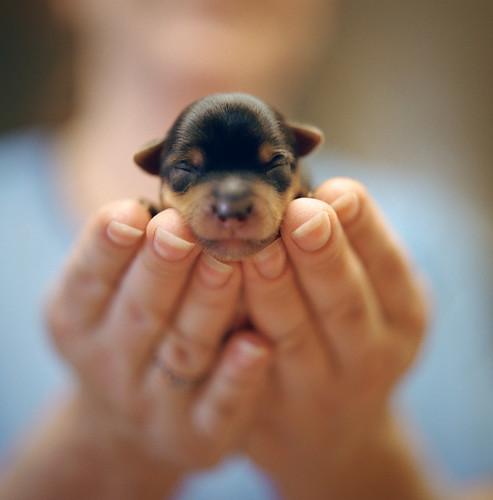 newly born.