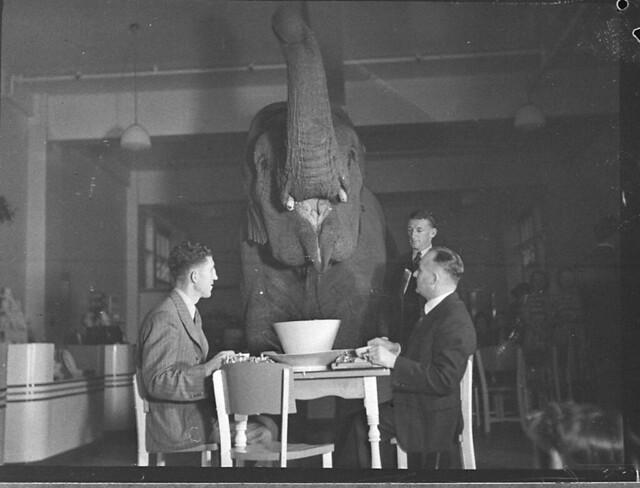 Elephant's tea party, Robur Tea Room, 24 March 1939, by Sam Hood from Flickr via Wylio