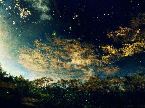 sky abstract nature water reflex pond upsidedown galaxy abstraction algae galactic naturalabstract