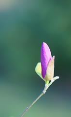 Fleur de bokeh
