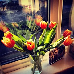 Evening sun tulips on the windowsill ☀