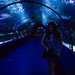 Antalya aquarium by joshmonk