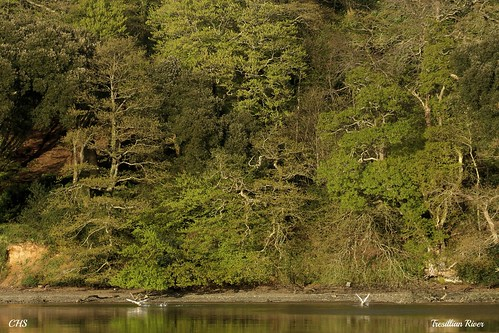 Tresillian River, Cornwall by Claire Stocker (Stocker Images)
