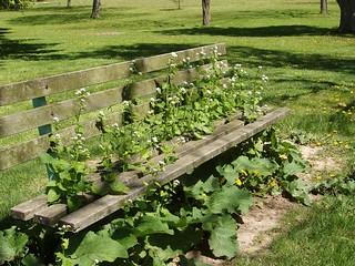 weedy bench