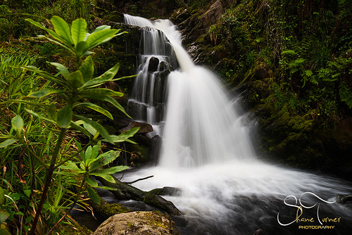 park wood ireland water forest photography waterfall woods nikon photographer shane kerry national killarney co turner cascade d800 cokerry tomies o'sullivan's
