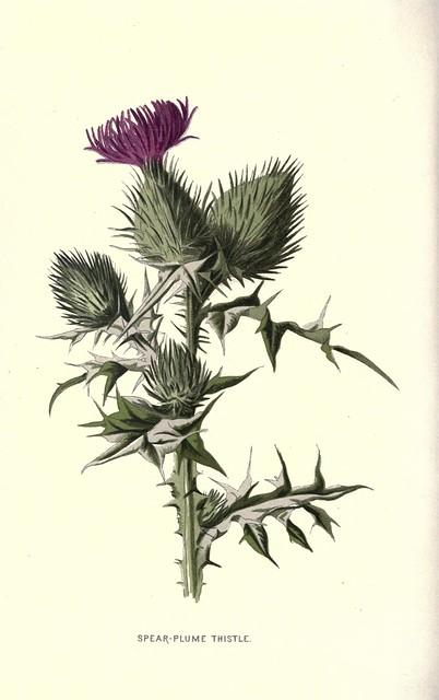 8772887800 fff5bf5070 for Botanical tattoo london