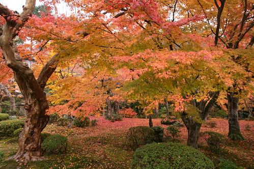 【写真】紅葉 : 圓光寺