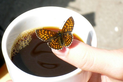 Coffee with a butterfly III