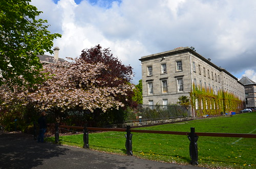 Blühende Kirschbäume im College