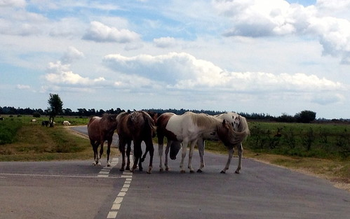 New Forest Ponies Traffic Jam