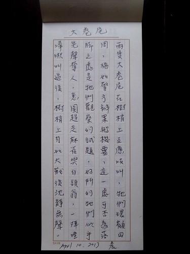 20130410-大卷尾-1