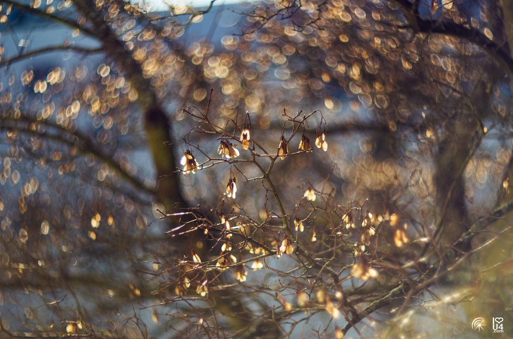 Helios 40 and how to make this outrageous Bokeh and Swirl