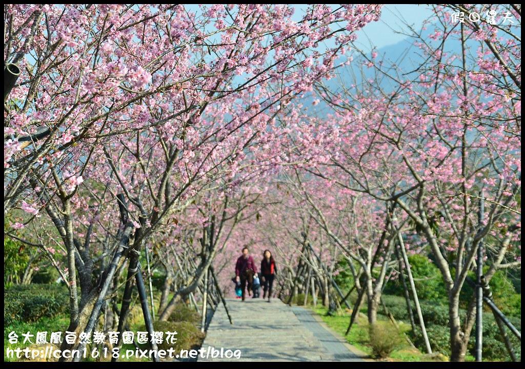 台大鳳凰自然教育園區櫻花DSC_6083