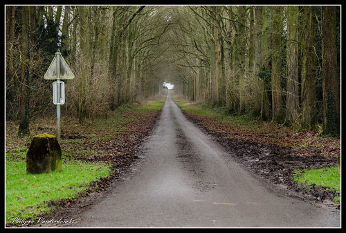 Forest road to Castle Anvaing