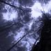 Alberi Nebbia by Soulex_Photos