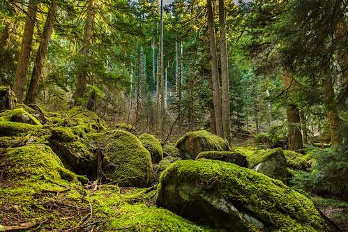 trees moss boulders onone oldmasonlaketrail