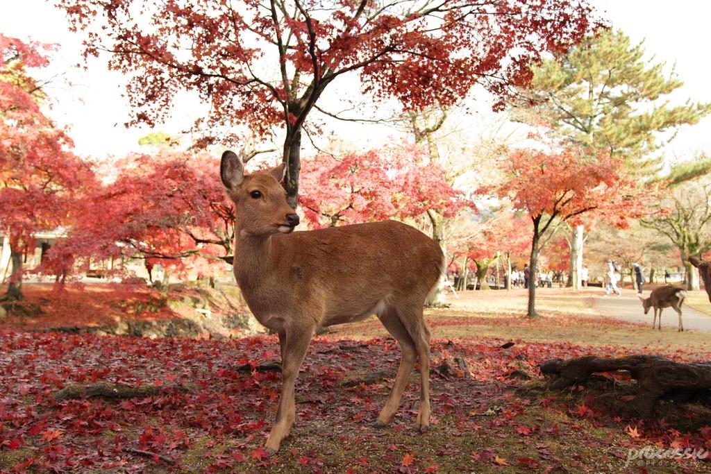 Nara_0046