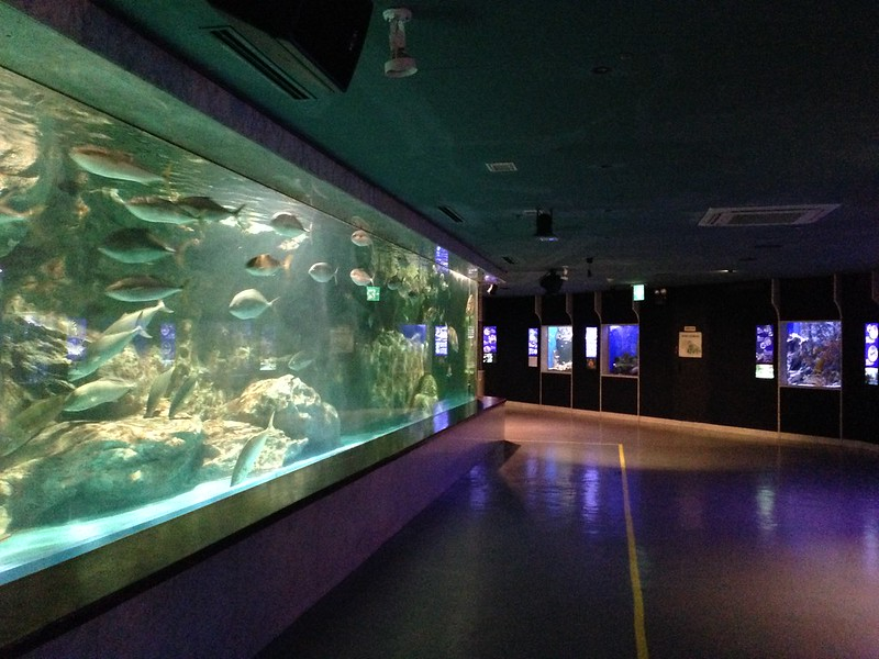Their big fish tank.