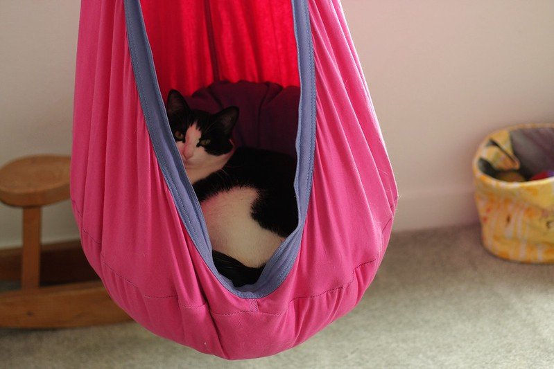 Simpkin in the hammock hideaway
